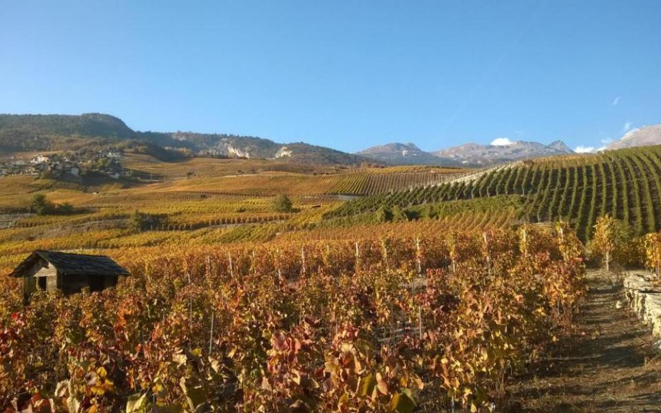 Valais Vineyards - Sierre