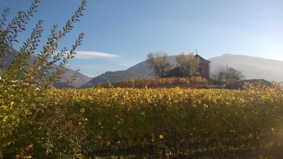 Sierre Vineyard